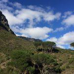 Pipe Track Jaimi Shields Rag and Bone Cape Town 2